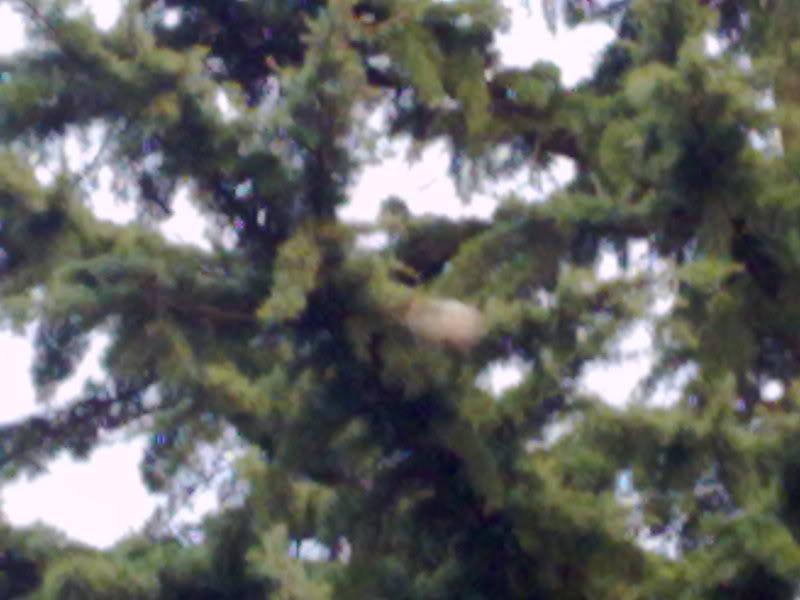 patologie ed infestanti del bosco 08012012682