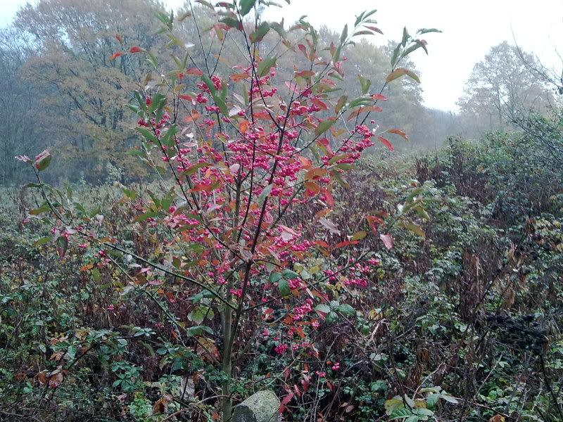 Arbusto dai fiori rossi 02122011520