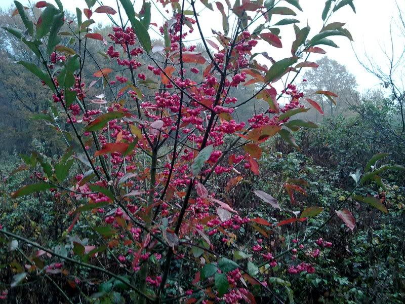 Arbusto dai fiori rossi 02122011523