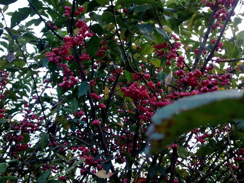 Arbusto dai fiori rossi 04112011388