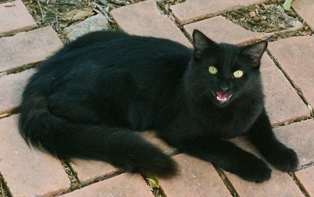 Yak's new kitty!! 27850033
