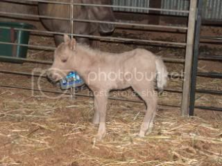 We have a FILLY... 006-13