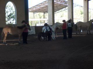 Western Australian Bucksin  Show 019-14