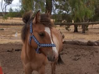 Our new ponies... 023-11