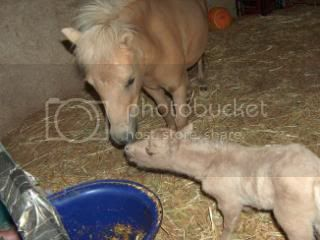 We have a FILLY... 028-10