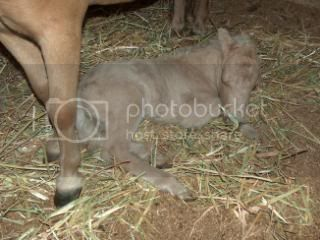 We have a FILLY... 029-12