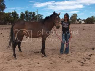 Riding Pony Mare 035-7