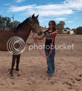 Riding Pony Mare 036-5