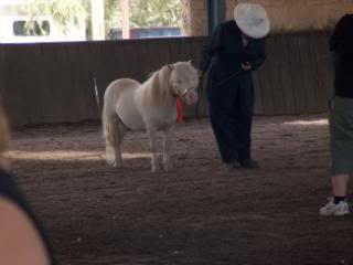Western Australian Bucksin  Show 042-7