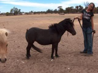 Our new ponies... 045-10