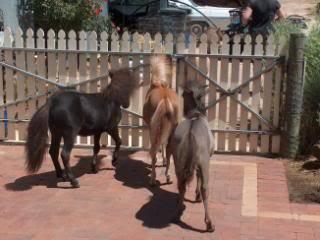 The Three Stooges... 048-9