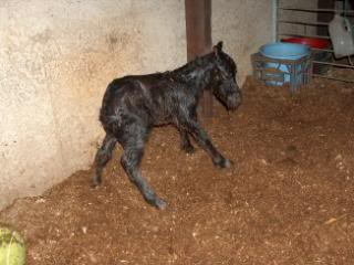 its a Filly!!! 051-10