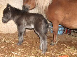 its a Filly!!! 051-11