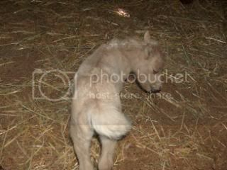 We have a FILLY... 052-6