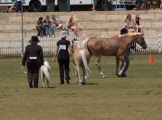 Perth Royal Show... 068-4