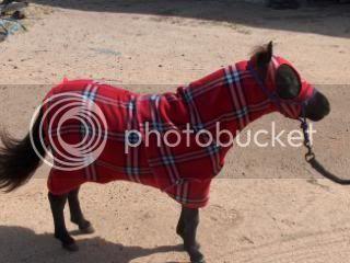 Red Fleece Show set 072-8