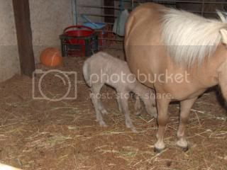 We have a FILLY... 075-8