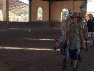 Western Australian Bucksin  Show 076-6