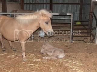 We have a FILLY... 079-13