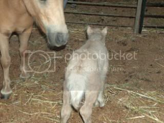 We have a FILLY... 098-3