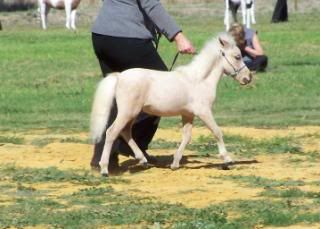 Miniature colts 2-5-1020028-Copy