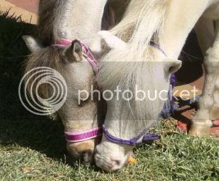 R.I.P Blossom... Ponies018-Copy