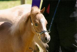 Dilute State Show 2 Scan0013