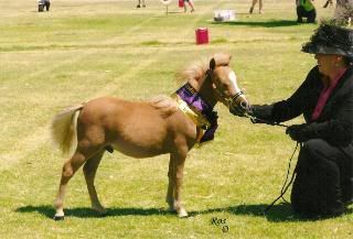 Miniature Colt Scan0015