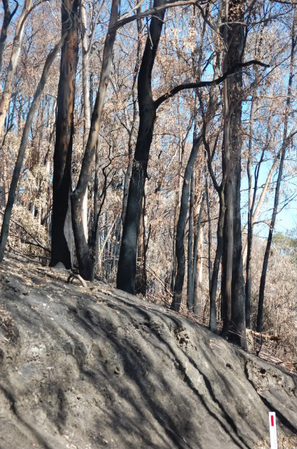 Melba Hwy fire pics Mar 09 Melbahwy14-1