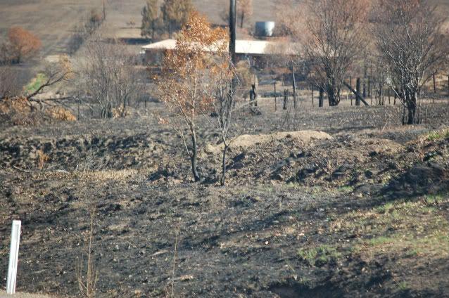Melba Hwy fire pics Mar 09 Melbahwyyarraglenhousesaved-1