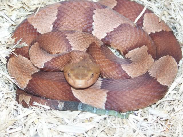 Some of my Herp friends Otherpics146