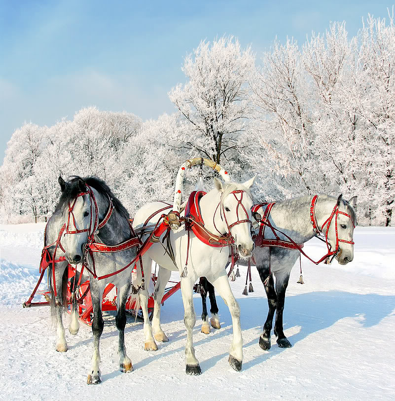 Las Fiestas en Rusia 3015346_large