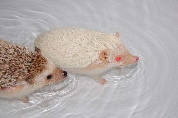 C'est l'heure du bain !! Bain6