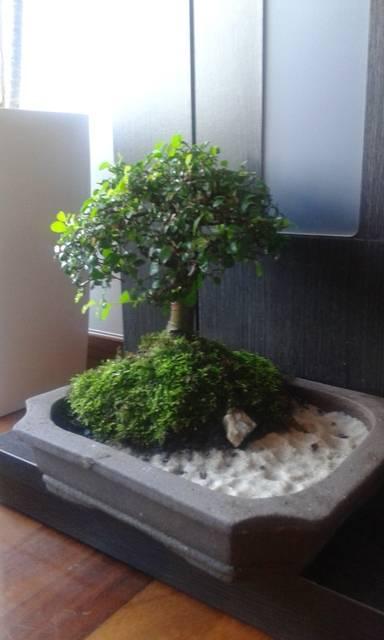 ayuda diseño de dos bonsais 147_zpskmdxltry