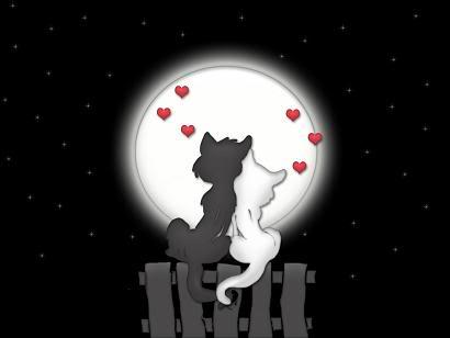 Volim te kao prijatelja, psst slika govori više od hiljadu reči Love_Cats
