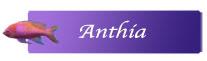 Anthia