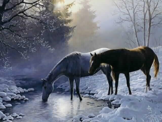 Konji HorsesRestingWallpaper