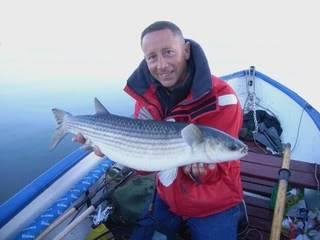 Anglais Mullet pêcheur RIMG0033-3
