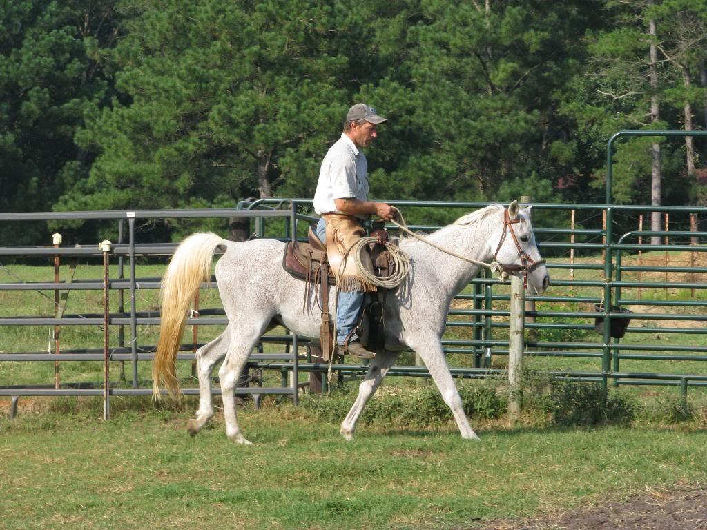 Arabian gelding Orphy --- ADOPTED IMG_1328