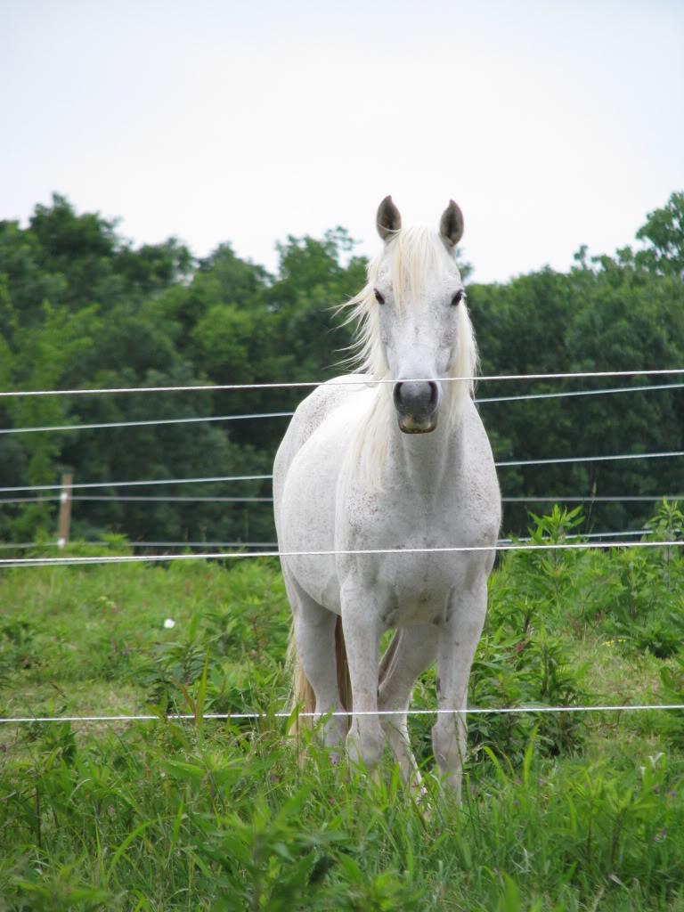 Arabian gelding Orphy --- ADOPTED IMG_3094