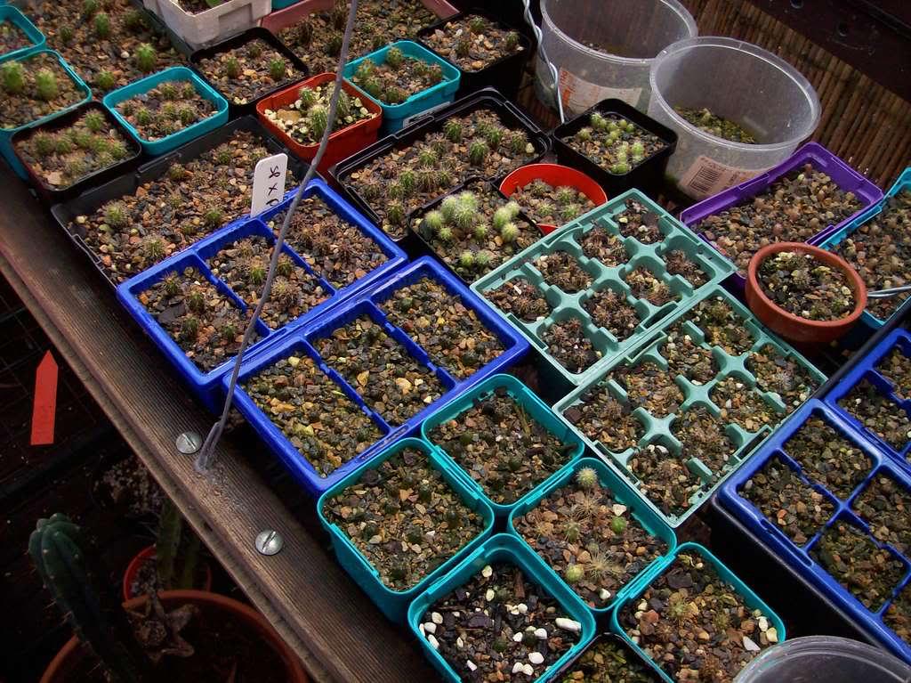 Last seasons seedlings 100_0776