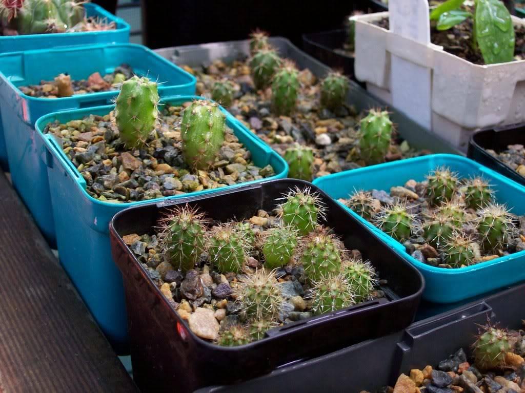 Last seasons seedlings 100_0777