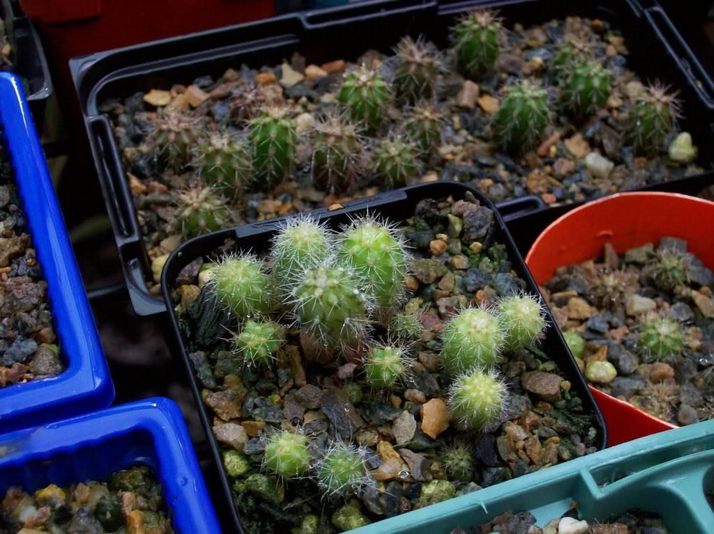 Last seasons seedlings 100_0778