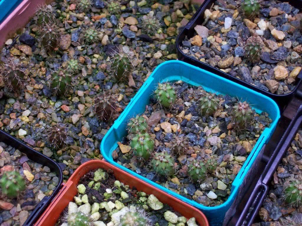 Last seasons seedlings 100_0785