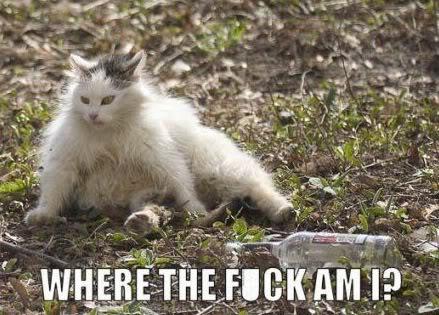 Smiješne slike, gifovi 2008_09_17_drunk_cat
