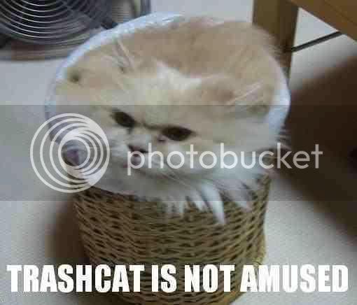 LOLCats TrashcatNotAmused