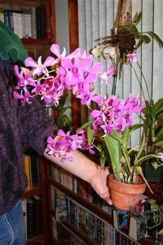 Orchids/ Tropicals OrchidI
