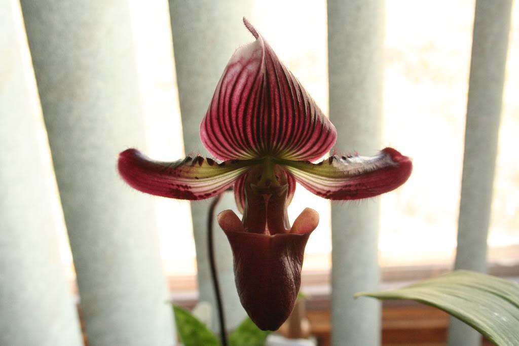 Orchids/ Tropicals ReefTanks083
