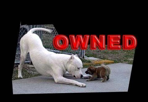 Owned & Fail 33