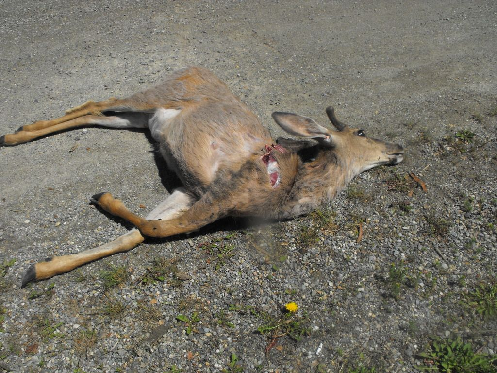 I killed Bambi DSCF1007_zpsjenvpjep
